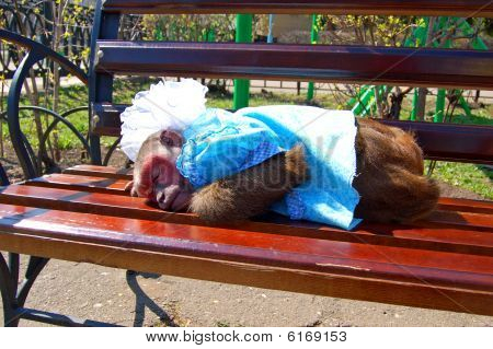 ape sleeps on bench