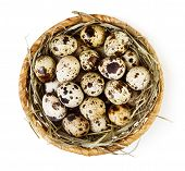 foto of quail  - Nest with quail eggs isolated on white background - JPG