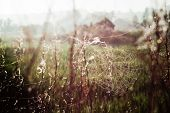 picture of cobweb  - Cobwebs on the meadow backlit early in the morning - JPG