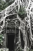 pic of raider  - Roots of big tree at Ta Prom TempleSiem Reap Cambodia where it was a shooting scene of Tomb Raider movie - JPG