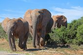 Постер, плакат: Слон пересечения