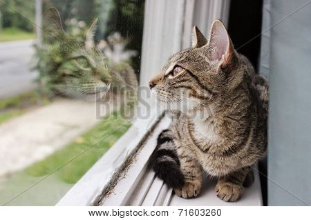 Feline's Reflection