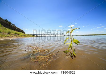 Plant Growing In Missouri River