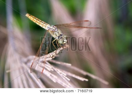 resting on stick