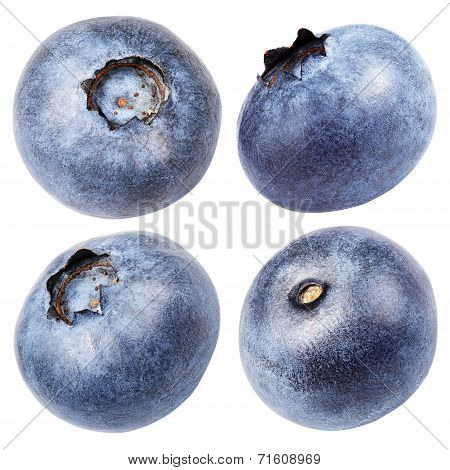 Collection Of Blueberry Berry Isolated On White