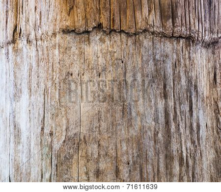 Old Wooden Bark In Nature