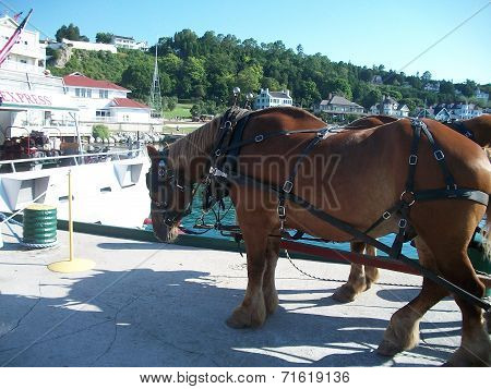 Horse on Mackinac Island
