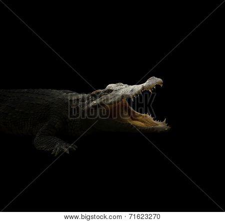 Croodile