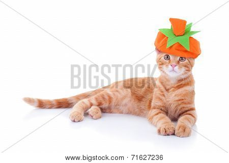 Thanksgiving Or Halloween Pumpkin Cat