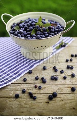 Blueberry - fresh blueberries from garden, healthy food, antioxidants