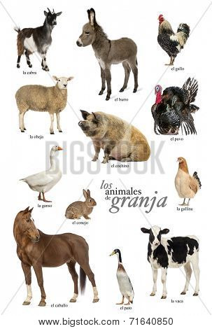 Educational poster with farm animal in Spanish