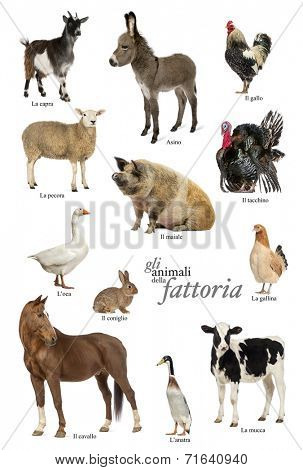 Educational poster with farm animal in Italian