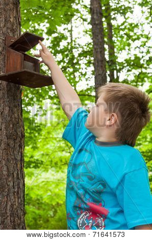 A Boy And Bird Feeder