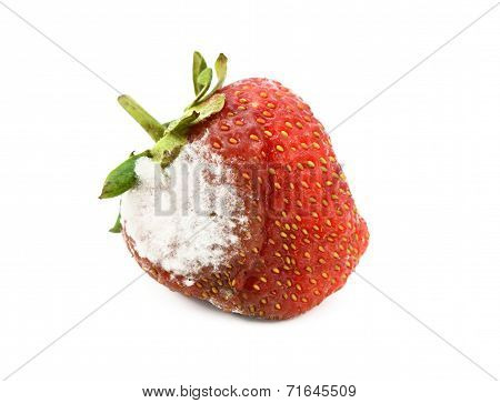 Red Strawberry With A Patch Of Mold