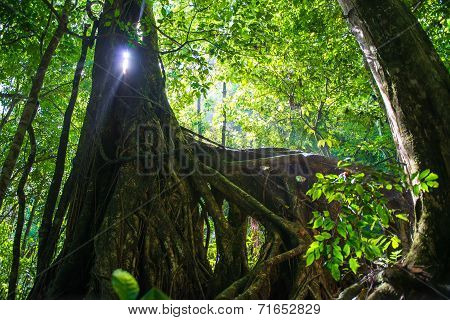 Light Through The Trunk Of A Tree