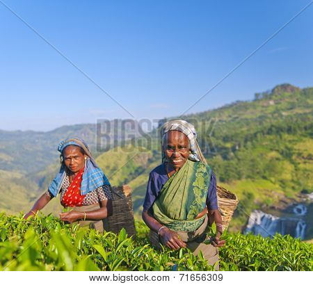 Two tea pickers smile as they pick leaves.