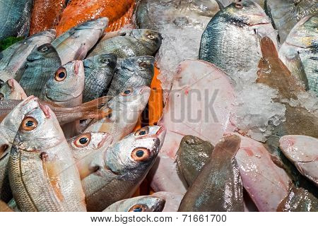 Many different fishes at a market