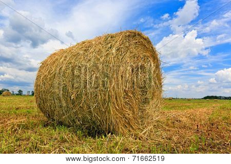 Hay rolls on agricultural meadow