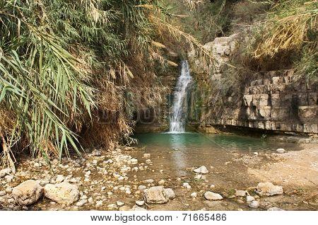 Ein Gedi Creek, Dead Sea, Israel