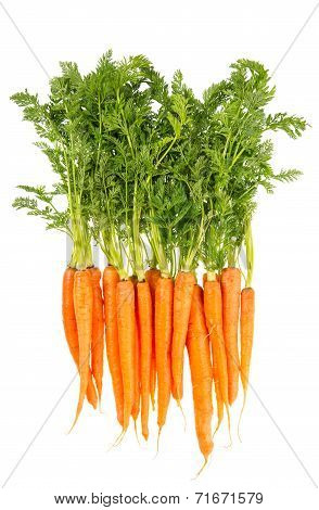 Fresh Carrots With Green Leaves Isolated On White