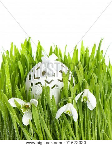 Snowdrops In Green Grass With Wet Drops