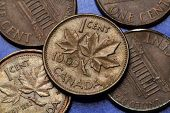 foto of canada maple leaf  - Coins of Canada - JPG