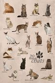 image of american bombay  - Cat breeds poster in French - JPG