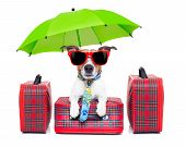 picture of carry-on luggage  - dog with luggage ready to go on summer holidays or vacation with umbrella and sunglasses - JPG