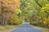 picture of twisty  - Asphalt road with autumn foliage  - JPG