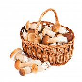pic of bolete  - Mushrooms in a basket isolated on white background - JPG