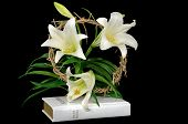 stock photo of easter lily  - Easter lily with crown of thorns on white Holy Bible isolated on black - JPG