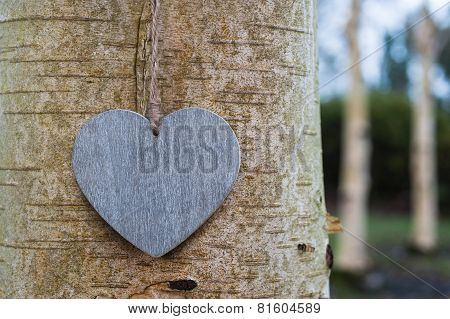 love heart tree trunk texture