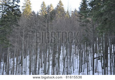 Forest in winter background