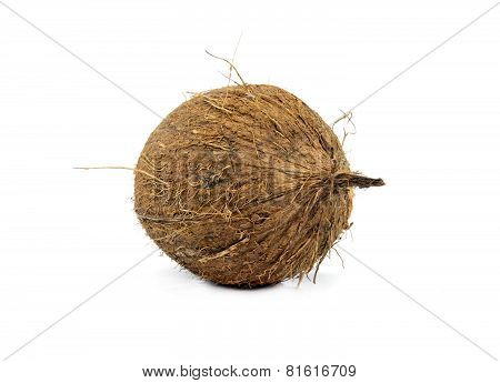 Coconuts Isolated