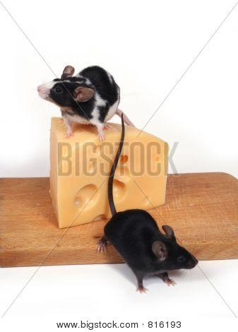 ratones y queso