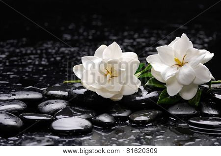 Still life with two gardenia with candle on black pebbles