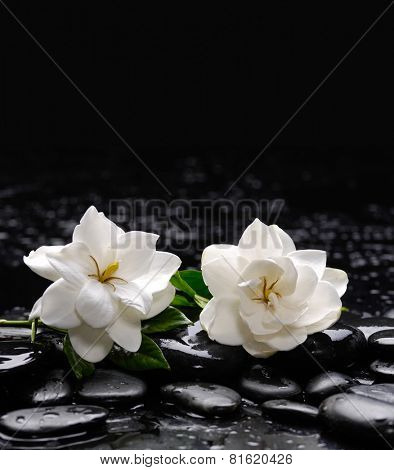Still life with two gardenia with therapy stones