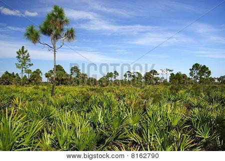 Big Cypress Landscape