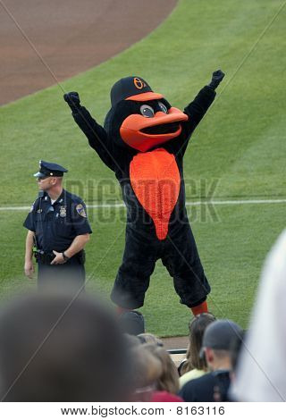 The Orioles Bird