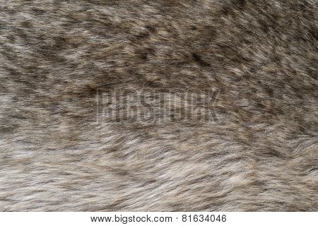 Abstract Fluffy Texture Of Brown Wild Fur