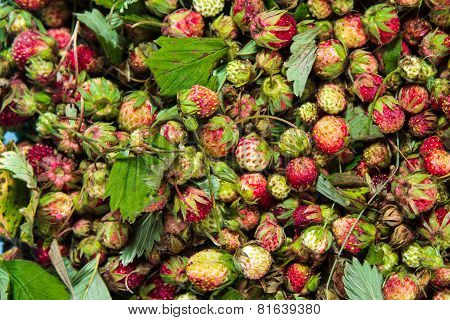 Forest Summer Red Wild Sweet Strawberries Berries Background Macro