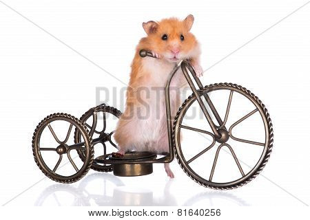 funny hamster on a bicycle