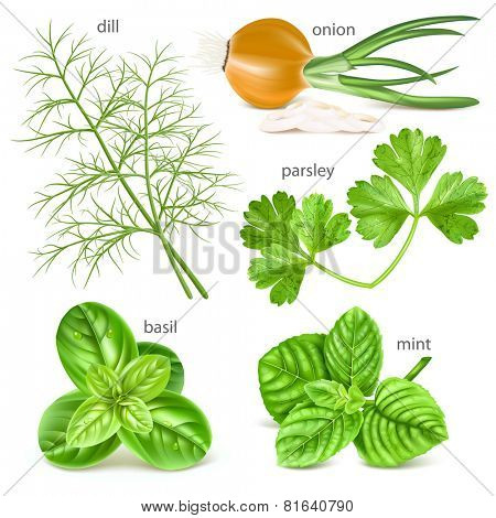 Herbs collection. Vector illustration.