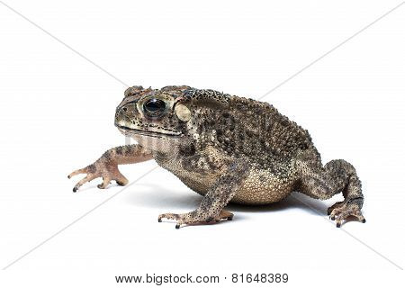 A toad isolated