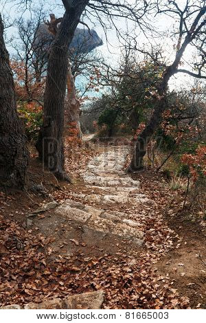 Stone Steps In The Middle Of A Picturesque Forest