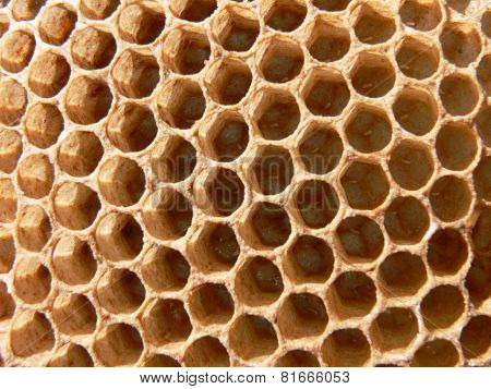 Honey bee eggs in comb