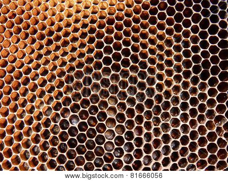 Honeybee eggs and larva on comb