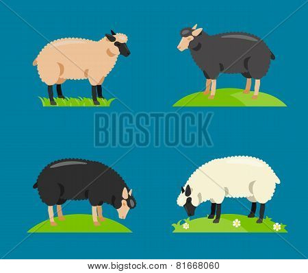 Illustration of a cartoon sheep.Vector