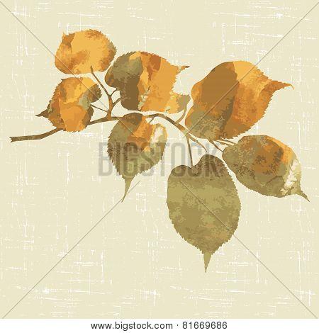 Branch Of Linden