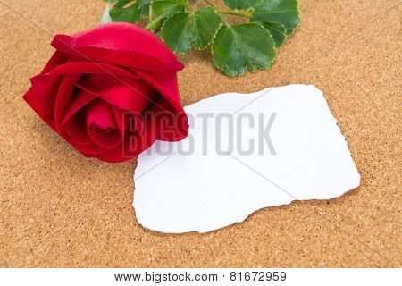 Single Red Rose With Paper That Was Burnt At The Edges Rose On Corkboard